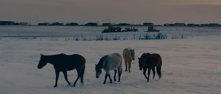 Horses walk across a snowy field